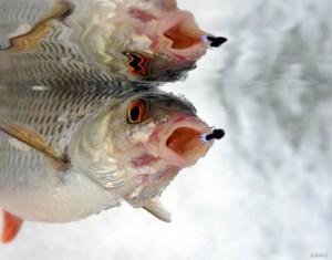 Мормышки для ловли плотвы зимой