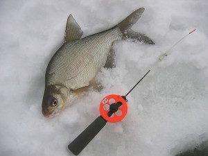 Ловля леща на течении зимой. Как и на что ловить. Видео