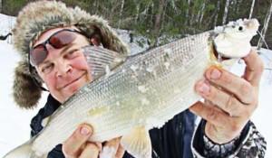 Ловля сига зимой – уроки успешной ловли. Видео