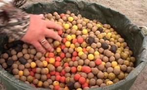 Ловля сазана на бойлы: секреты приготовления в домашних условиях