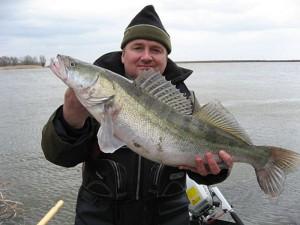 Особенности ловли судака на спиннинг осенью