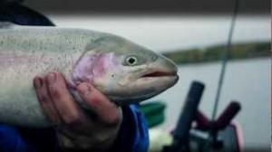 Ловля форели на фидер — полезные особенности рыбалки