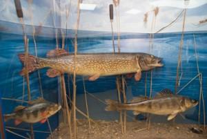 Подводный мир Вологодчины в одной экспозиции