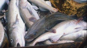 Глава Росрыболовства выступает за бесплатную любительскую рыбалку