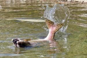 Чем может быть полезна или вредна рыба кета
