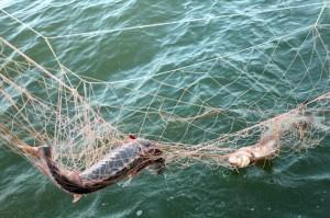 В Ярославской области были задержаны 9 браконьеров