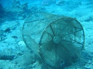 Обзор мордушек для ловли рыбы