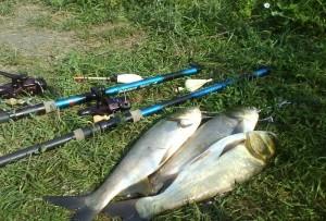 Ловля толстолобика со дна — необходимые навыки