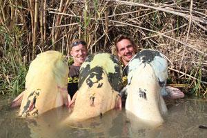 Невероятные гигантские сомы пойманы в реке Эбро