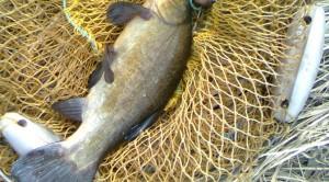 Ловля линя осенью — на что клюет эта рыба