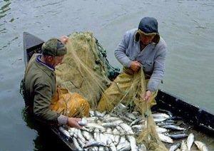 У Волгоградских браконьеров изъяли 600 килограммов улова