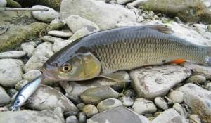 Акустическая многофункциональная приманка для рыбалки