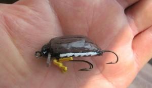 Ловим голавля на майского жука
