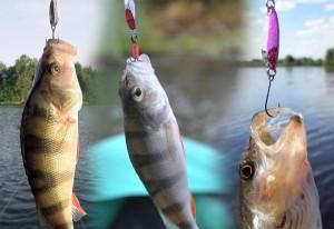 Ловля голавля на микроколебалки — рекомендации и советы