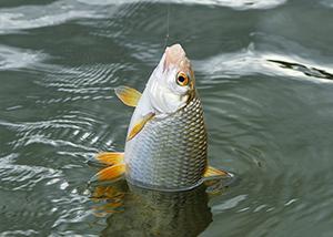 Карта рыболовных мест