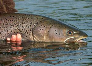 Рыбалка в Хакасии на тайменяТаймень рыба